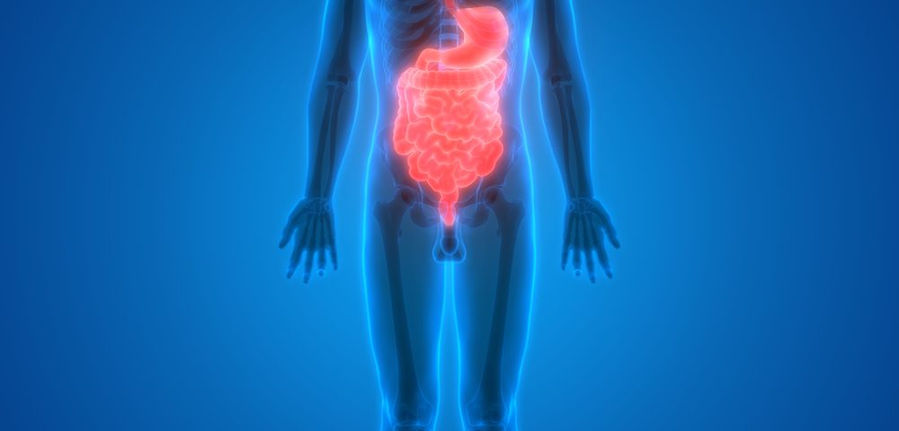 Gut Tissue with Functional Nervous System Created in Laboratory for First Time
