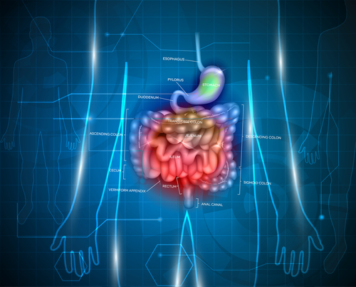 Bacteria-binding Protein in Gut May Work to Limit Inflammation in the Bowel and Elsewhere