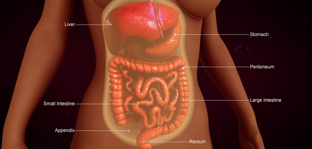 Mutations in INAVA Gene May Increase Risk of IBD, Yale Study Shows