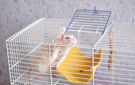 Eisai's Small Molecule Analog Reduced Inflammation and Injury in Mice with IBD, Study Shows