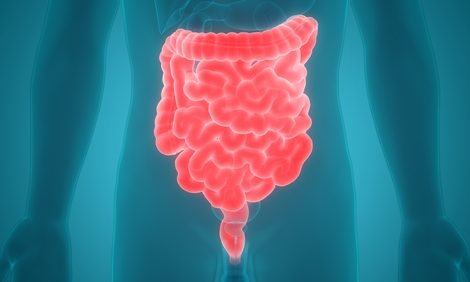 The Digestive System Is 30 Feet Long, and IBD Can Affect Any Part of It