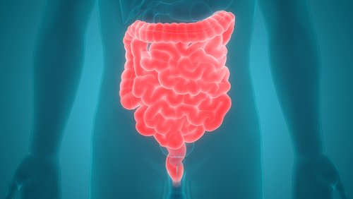 New Method to Record Vagus Nerve Activity Could Help Develop Treatments for IBD, Other Inflammatory Diseases, Study Suggests