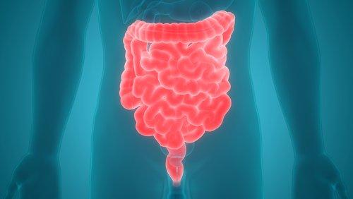 vagus nerve, digestive system