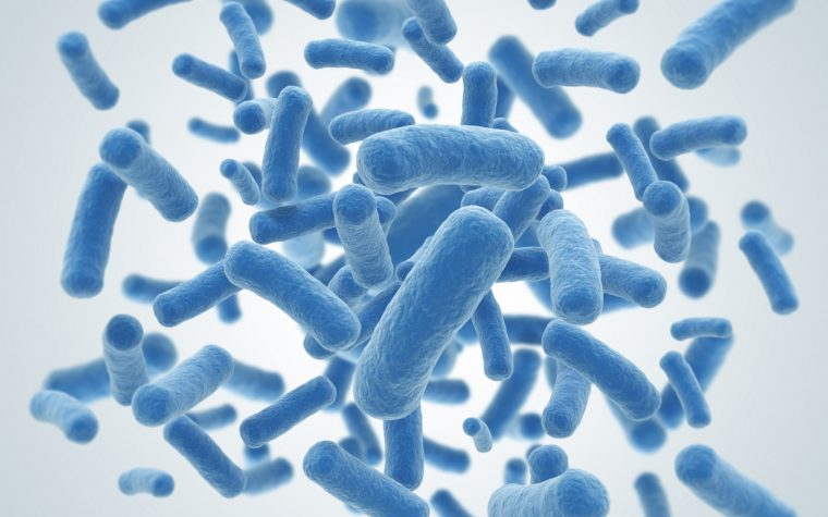 microbes and gut health