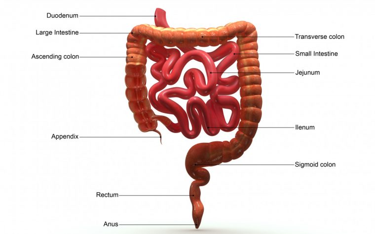 Defective MDR1 Gene May Promote Ileal Crohn's Disease, Study Suggests