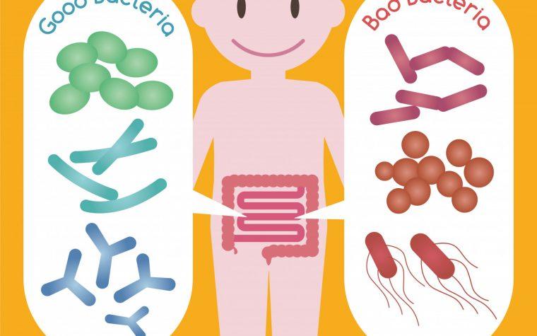 Bacteria fungal profiles